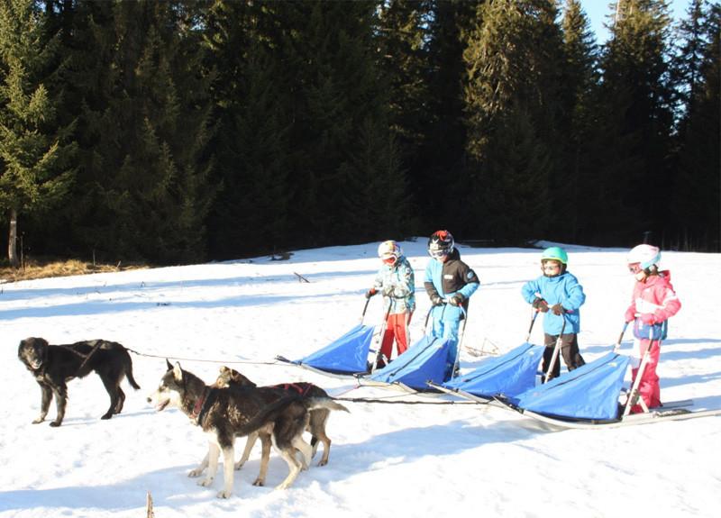 Baby park - Dog sledding