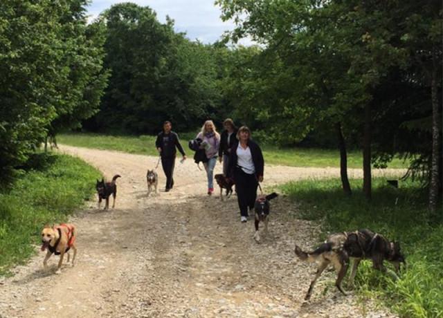 Escursione Cani