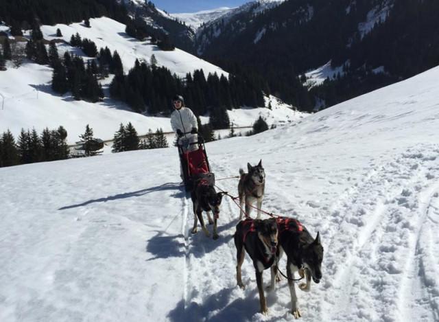 Conduite d'attelage de chiens de traîneaux