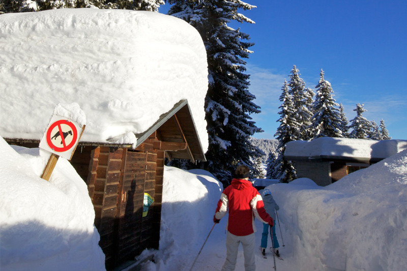couloir-de-neige-foret-1819