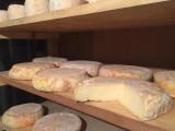 Notre production de formages de chèvre