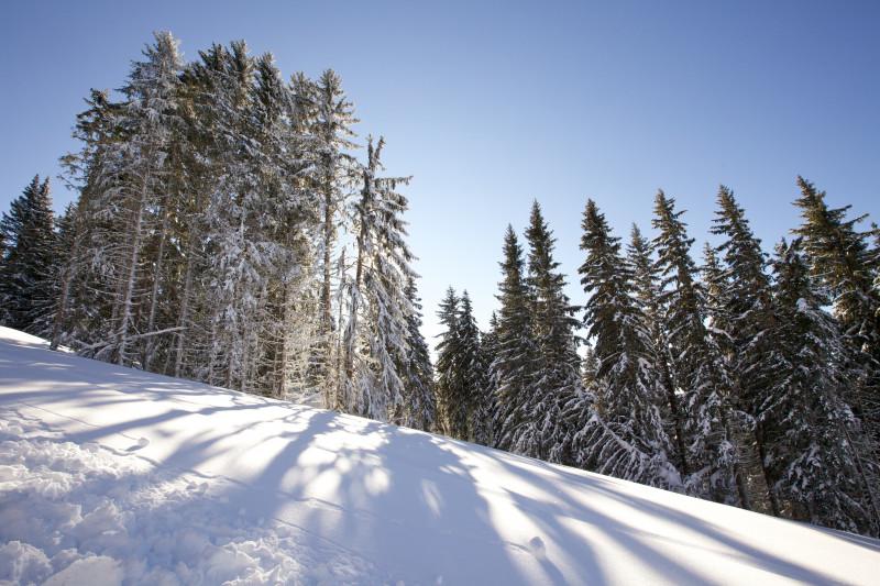 les forêts de nos montagnes les Saisies