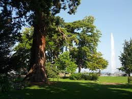 Jardin Anglais de Genève